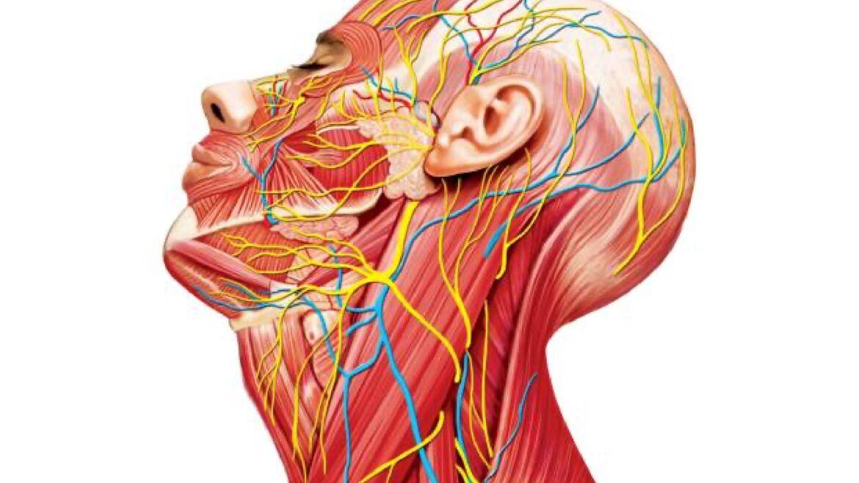 Cirugía oncológica de cabeza y cuello